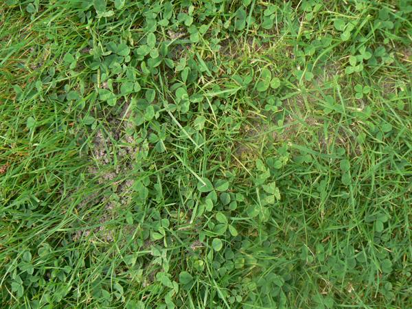 Mieren in het gras